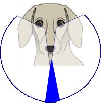 いぬけいと 犬の視線 側面の目