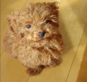 2ヶ月の時の愛犬
